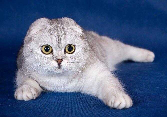 Обои котята коты кошки картинки на рабочий стол раздел